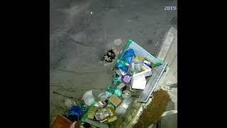 가로등이야기 쓰레기불법투기 감시가능한 가로등