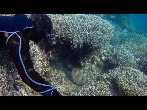 Freediving in a Marine Protected Area   Macrohon, So. Leyte