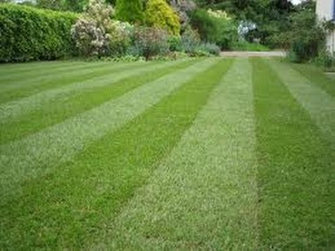 How To Make Your Lawn Look Beautiful This Spring Youtube