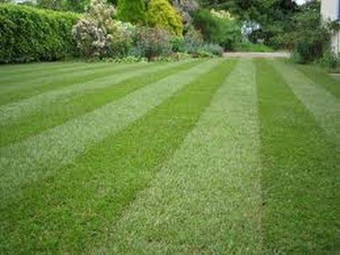 make lawn beautiful