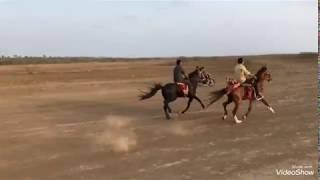 horse race video surat