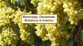 Виноград. Системы орошения. Grape 14 3 17