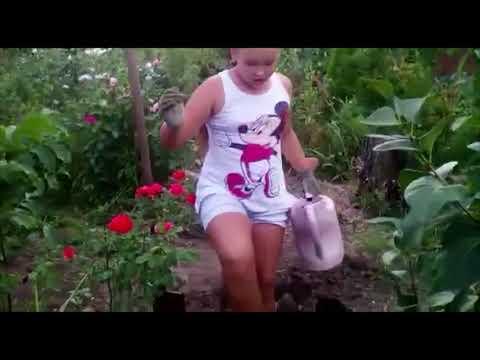 Инжир – выращивание своими руками, как вырастить на