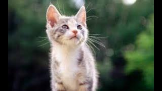 Katze und Maus spielen -