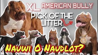 BUYING MY DREAM DOG XL AMERICAN BULLY | PICK OF THE LITTER | HINDI LANG ISA?!