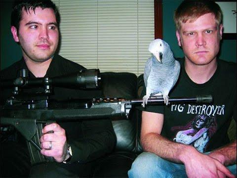 Hatebeak – A Death Metal Band Whose Lead Vocalist Was A Parrot