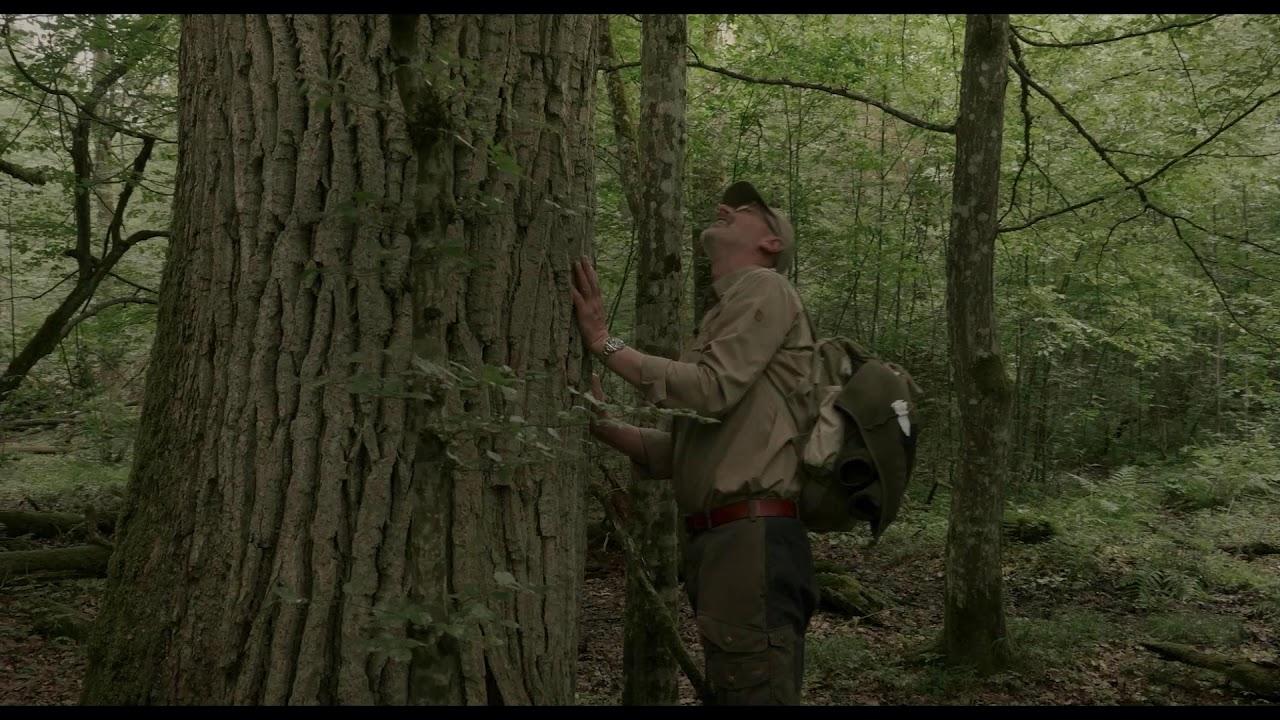 Download HIDDEN LIFE OF TREES - vanaf 12 augustus in de bioscopen!