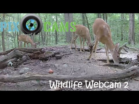 PixCams.com Wildlife Cam Now Live Streaming in 1440P Resolution!