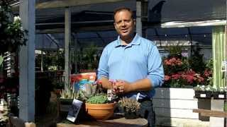 A simple succulent container garden