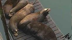 Sea Lions - Newport Oregon - YouTube Travel