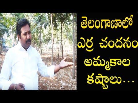 Red Sandalwood Cultivation in Telangana || Marketing Issues || Warangal TV
