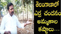 Red Sandalwood Cultivation in Telangana || Marketing Issues || Warangal TV