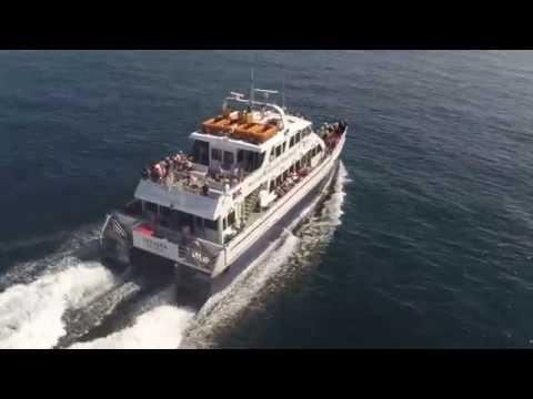 Boston Harbor Cruises - Whale Watch