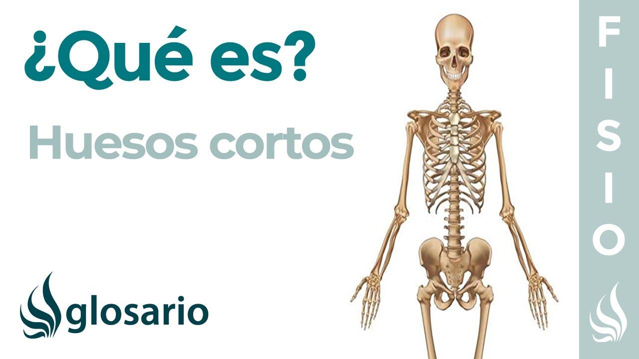 Huesos Cortos Qué Son Significado Dónde Están Función Y Lesiones Youtube