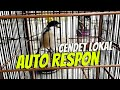 Auto Respon Suara Cendet Gacor Atau Pentet Gacor Lagu Gereja Tarung  Mp3 - Mp4 Download