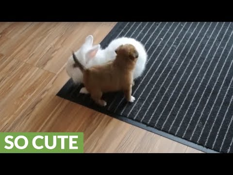 Puppy and bunny playtime will melt your heart