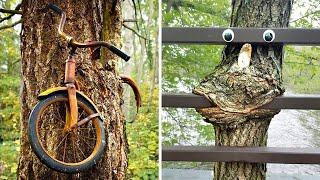 Trees Eating Things