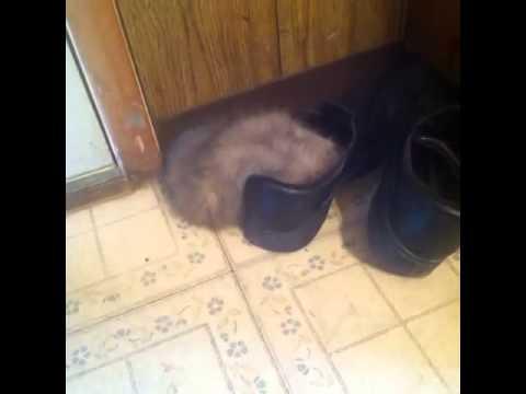 My cats weird sleeping positions xD