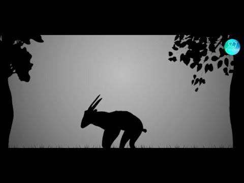 Shadow Theatre Fireflies   WWF