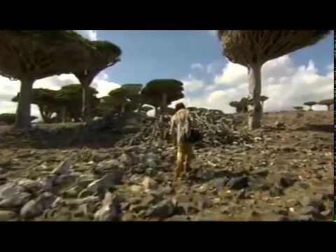 (31) Ushuaia Nature - Parfums de l'Arabie heureuse (Yémen-Oman)