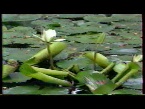 """Tefafano Sisters - """" Tahiti Nui """""""