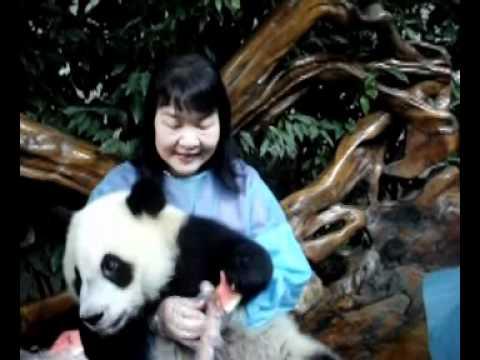 Alie Chang at the Chengdu Giant Panda Breeding Center