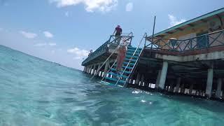 Снорклинг|Бассейн|Подводный мир индийского океана|Акула,черепаха,рыбы|Мальдивы|Свадебное путешествие