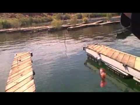 Lake havasu bass and bluegill fishing youtube for Lake havasu fishing