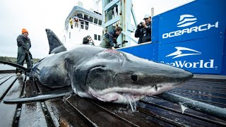 SCARY and True Shark Attacks!