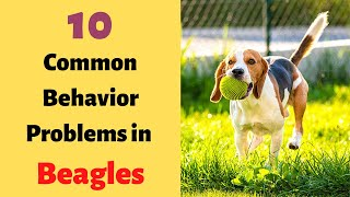 10 Most Common Behavioral Problems in Beagles | Beagle Behavior and Training |