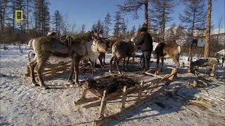 Russia - Wild Russia Siberia National Geographic Documentary HD thumbnail