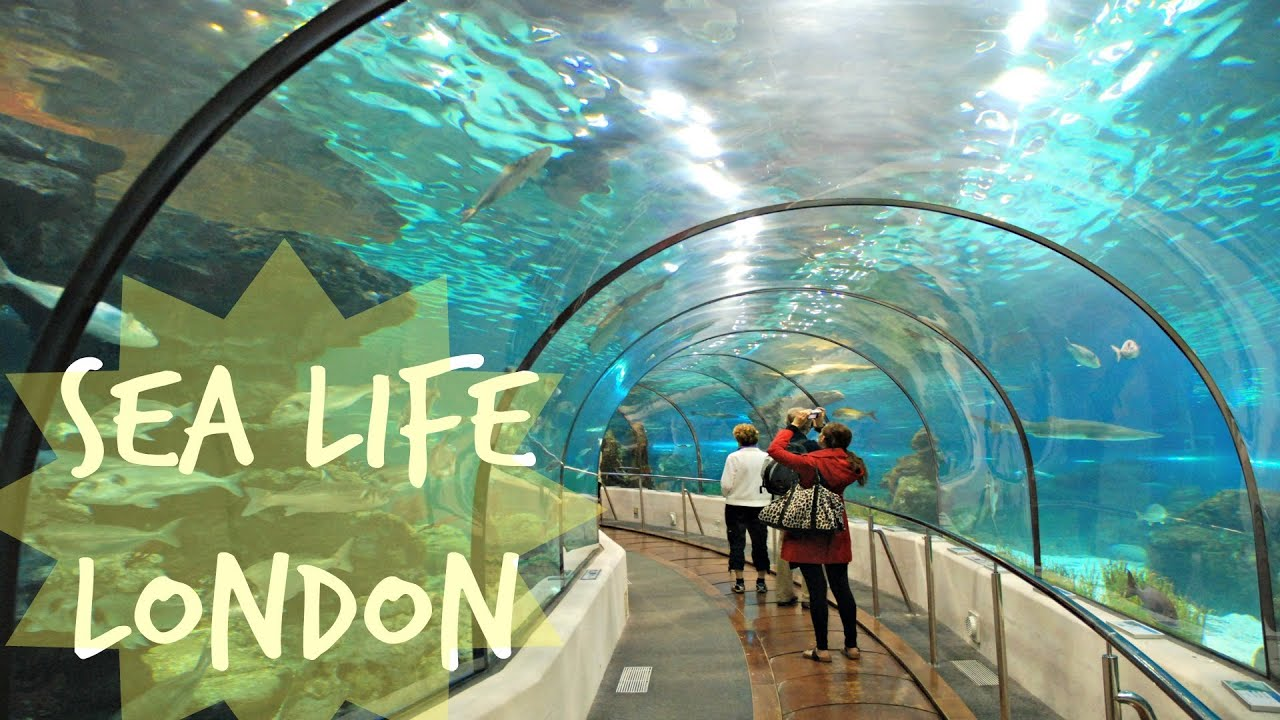 Been to Sea Life Centre Great Yarmouth? Share your experiences!