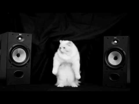 Hip Hop Dancing Cats