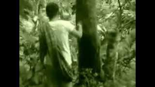 Dua gadis manis main di hutan minory singh aur moza sdj 15jun14 siabu