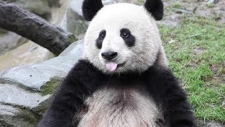 UNDP Panda Ambassadors for SDGs thumbnail