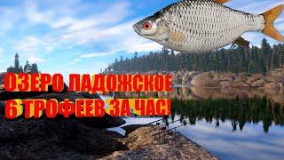 Русская Рыбалка 4 озеро Ладожское 6 трофеев за час Russian Fishing 4