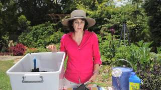 How To Grow Organic Water Chestnuts