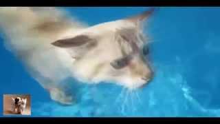 Новейшие видео-приколы про котов, смешные и забавные животные 2014-2015, выпуск 1