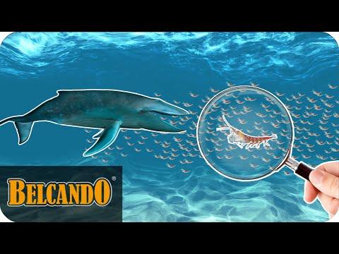 BELCANDO | Das Besondere im Hundefutter #1 Krill