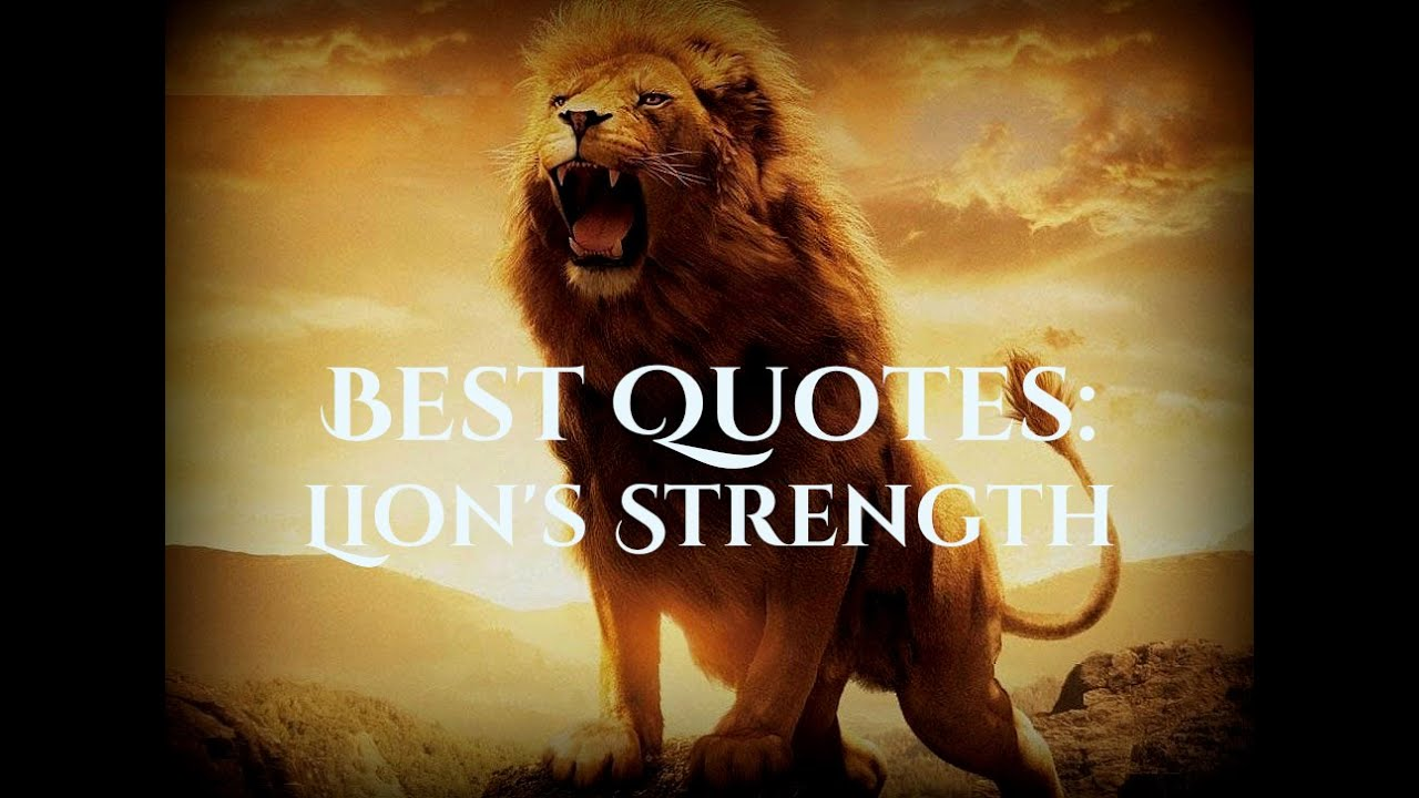 Life Quotes Lion S Strenght Youtube