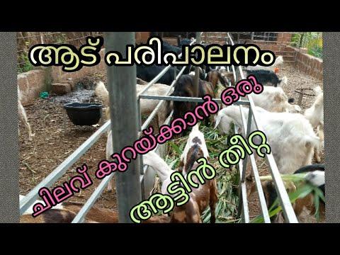 ആട് പരിപാലനം; ചിലവ് കുറഞ്ഞ ആടുകളുടെ തീറ്റ/ Goat farm kannur kerala
