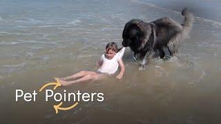 Volunteer Dogs   Pet Pointers