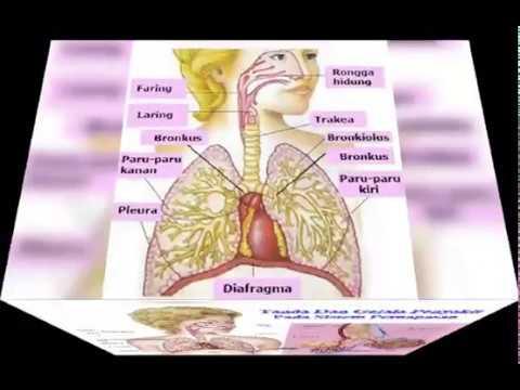 Cara mengobati batuk kering dan berdahak yang tak kunjung ...