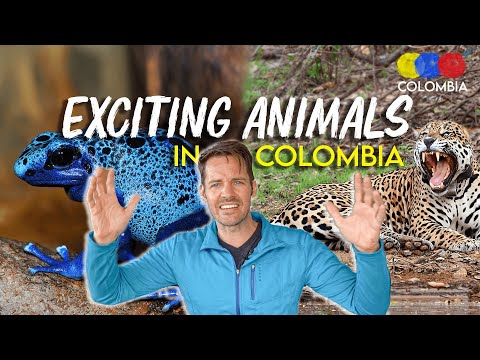 The Most EXOTIC ANIMALS in Colombia – Colombian Travel Guide
