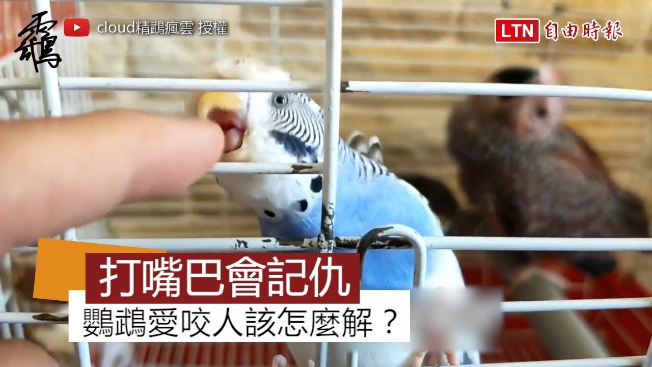 鸚鵡愛咬人不能打回去!簡單一招教你如何告別咬人鸚鵡