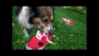 Dog Training Online Review- Does dog training online Review By Tracy Lenderink  Really Work?
