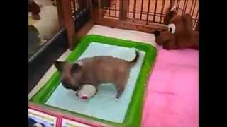 cute animals doing cute things With a toy of playing love funny animal