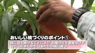ぼく、岡山県マスコットももっち!あっちこっちへ走りまわって、岡山の魅力を紹介するよ。 今回は、うらっちと一緒に岡山の特産品、白桃につ...