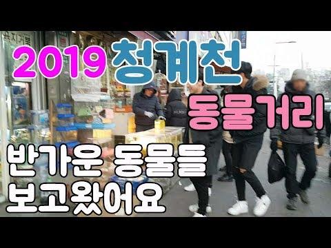 2019 청계천 애완동물거리에서 만난 반가운 동