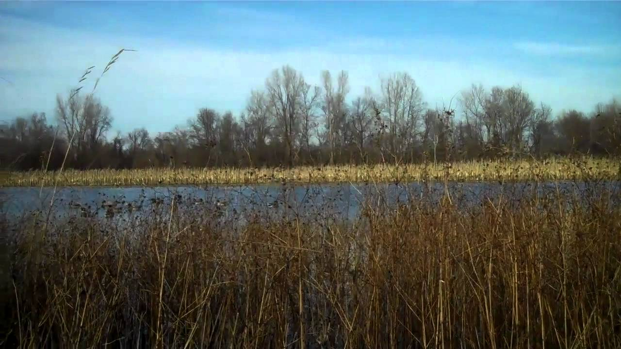 Mallard Farms Flooded Corn Duck Hunt 11 18 10 Youtube